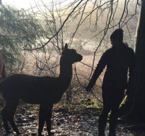 Alpaca Walk and talk på en frostdag - stilhed og sol. Det er sundt for både krop og sjæl.