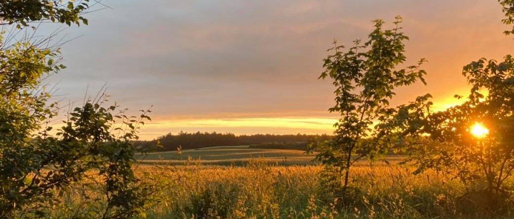Naturterapi i Vendsyssel - Rodfæste August 2021
